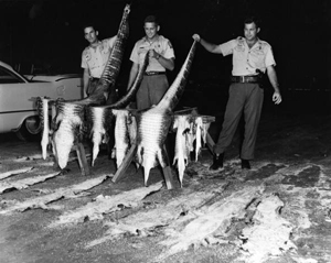 Game and fish officers with alligator skins (1966)