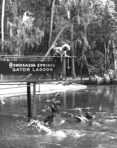 Alligator feeding show: Homosassa Springs, Florida (1970s)
