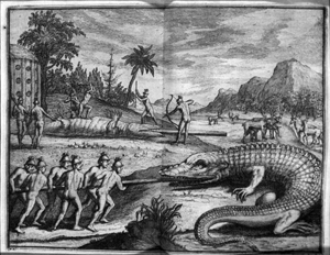 Timucua Indians hunting alligators in Northeast Florida (1564)
