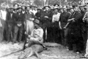 Alligator shot by the captain of 4th Illinois Volunteers: Jacksonville, Florida (1898)