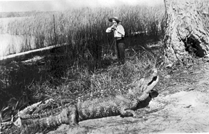 Alligator hunter about to bag a big one (1880s)