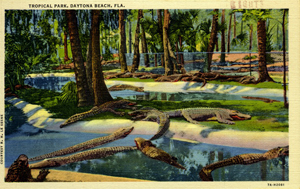 Tropical park: Daytona Beach, Florida (1937)