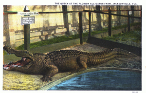 The queen at the Florida Alligator Farm: Jacksonville, Florida (1913?)