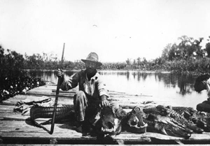 Alligator hunter posing with the kill from a hunt (ca. 1920)