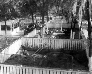Visitors at the Tampa Alligator Farm: Tampa, Florida (1917)