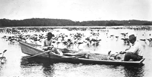 Alligator hunters in a boat with an alligator (1913)