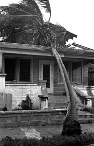 Coconut tree knocked over onto house on Whitehead Street, Key West, Florida (1965)