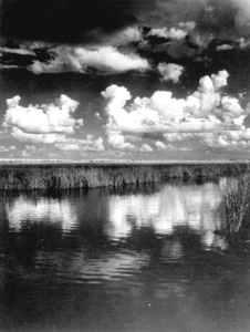 Clouds over the Everglades (1950)