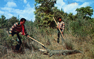 Seminoles hunting alligators