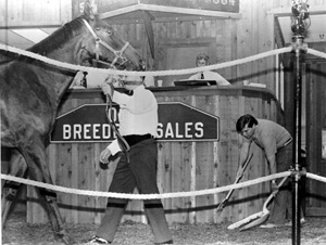 "State Senator Bob Graham during workday as a ""Pooper scooper"" for Ocala Breeders Sales: Ocala, Florida (1977)"