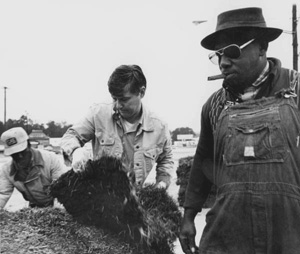 Florida Governor Bob Graham sodding grass for the Hammet Company Incorporated (1979)