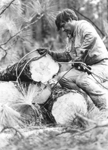 Florida Governor Bob Graham tying steel cables around timber: Tallahassee, Florida (not after 1987)