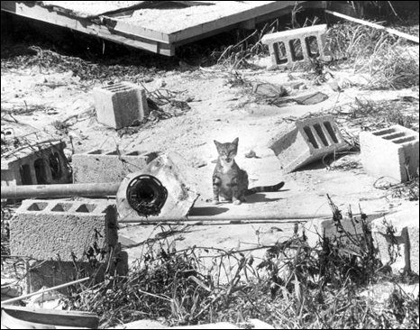 Cat in middle of debris from Hurricane Donna: Marathon, Florida (1960)