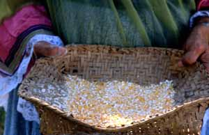 Lottie Shore holding hand ground corn: Brighton Seminole Indian (1989)