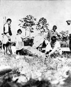 Seminole family butchering a manatee for food (c. early 1900s)