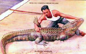 Example of Seminole alligator wrestling (1930s)