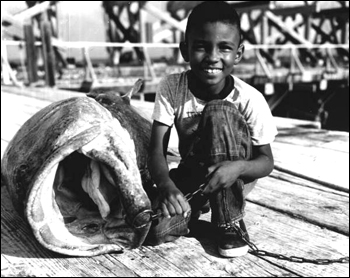 Unidentified boy with a Goliath Grouper: Boca Grande, Florida (1955)
