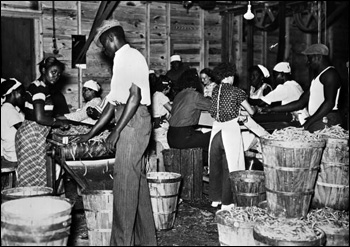 Migrant workers at a bean canning plant: Dania, Florida (1937)