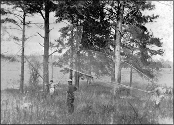 Capturing Quail with nets at Luna Plantation: Leon County, Florida (ca. 1930s)