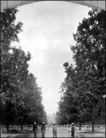 Pickers at harvest time in a pecan grove: Baker County, Florida (1929)