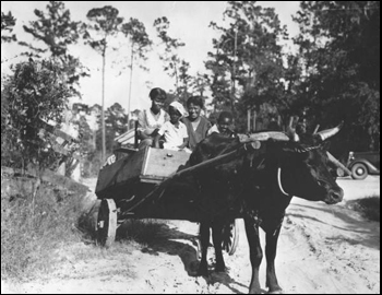 African-American children in ox cart at the Cherry Lake Rural Rehabilitation Project: Cherry Lake, Florida (1935)
