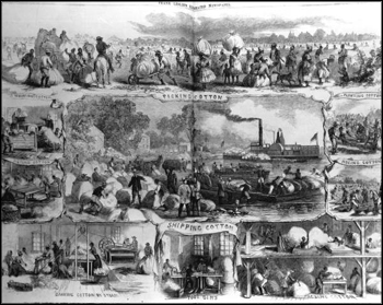 Scenes of the Cotton trade (1862)