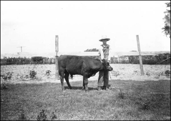 Jackson boy with a shorthorn calf (1919)