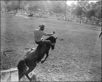 Cowboy on Bucking Horse: Bonifay, Florida (1950)