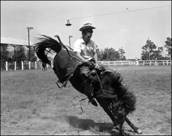 Cowboy rides a wild horse at the Tupperware Jubilee: Orange County, Florida (1955)