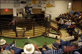 North Florida Livestock Market. Ellisville, January 2009.