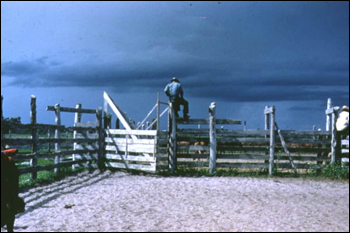 Cowboys standing on top of the corral fence (1961)