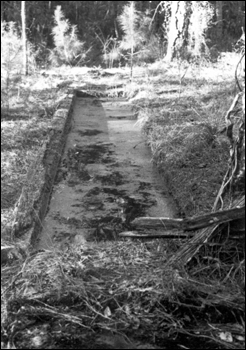 Remains of a 1922 dipping vat, near Natural Bridge: Leon County, Florida (1980)
