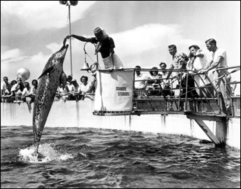 Dolphins performing to the delight of the tourists: Marineland, Florida (1949)
