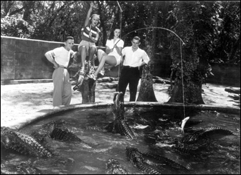 People feeding fish to alligators at an alligator farm: St. Augustine, Florida (1949)