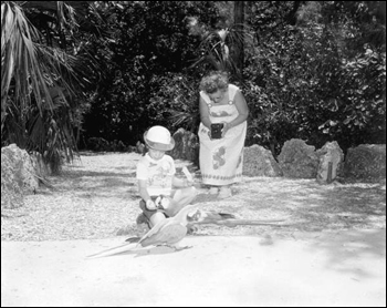 Child feeding parrots at Parrot Jungle: Miami, Florida (1955)