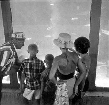 Family enjoying themselves at Gulfarium: Fort Walton Beach, Florida (1963)