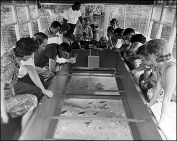 Tourists in a glass-bottom boat at Silver Springs: Ocala, Florida (19--)