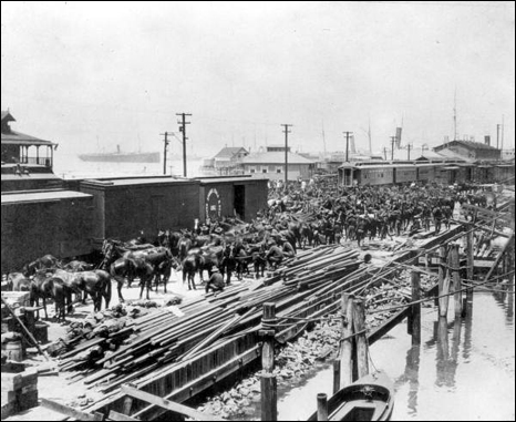 Loading horses onto railroad cars at Port Tampa during the Spanish-American war (1898)