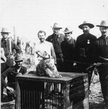 """Mascot of the """"Rough Riders"""" (1898)"""