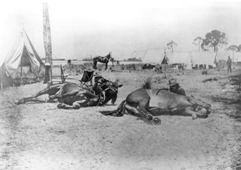 9th United States Calvary training horses for Spanish-American war (ca. 1898)