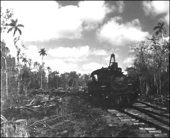Trains pulling lumber: Copeland, Florida (ca. 1948)