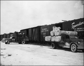 Produce being loaded into refrigerated cars (195_)