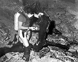 Scuba diver examining mastodon bones at Wakulla Springs