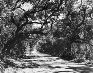 Houston Avenue, leading up to Kingsley Plantation State Park: Jacksonville, Florida (195-)