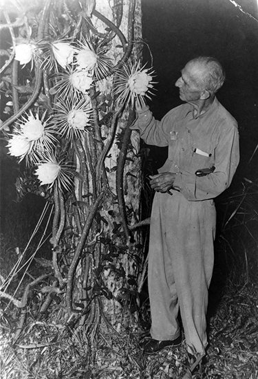 Laurence Bubbett and Night-Blooming Cereus