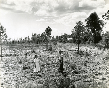 Michel and park ranger clearing land for Koreshan State Historic Site entrance, ca. 1961-1967s
