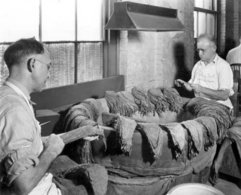 Workers selecting cigar wrappers : Tampa, Florida (19--)