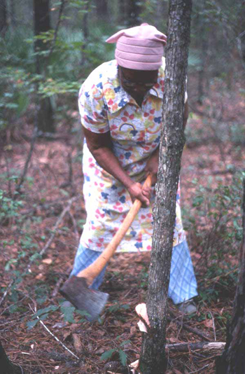 Lucreaty Clark chopping down a white oak tree to use for basket making (not after 1979)
