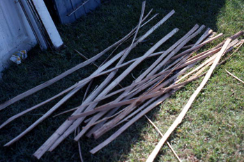 Strips of white oak gathered by Lucreaty Clark for basket making (not after 1979)
