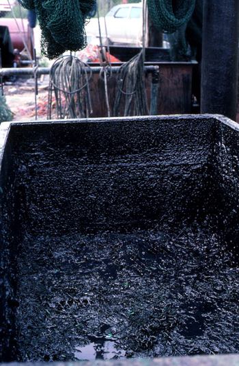 Tar vat used by Billy Burbank III for making nets: Fernandina Beach, Florida  (not after 1980)